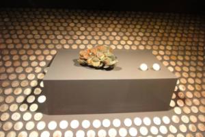 monedas o patrimonio